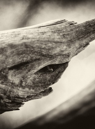 Picture of broken tree branch with eye and twig for pupil